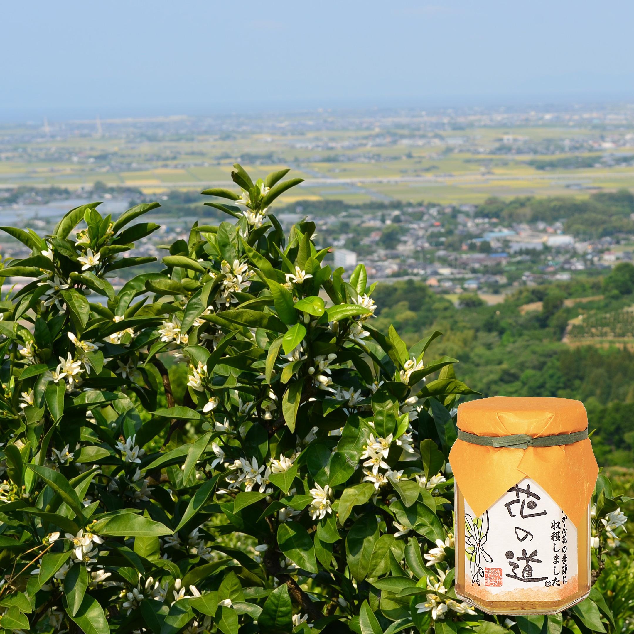 国産蜂蜜 花の道 みかん